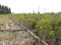 環境保全「霧島市10万本植林プロジェクト」